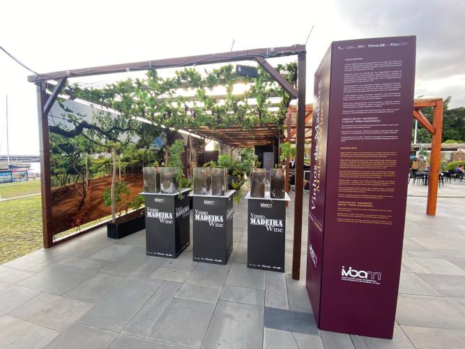 Vinhos da Madeira na Festa do Vinho